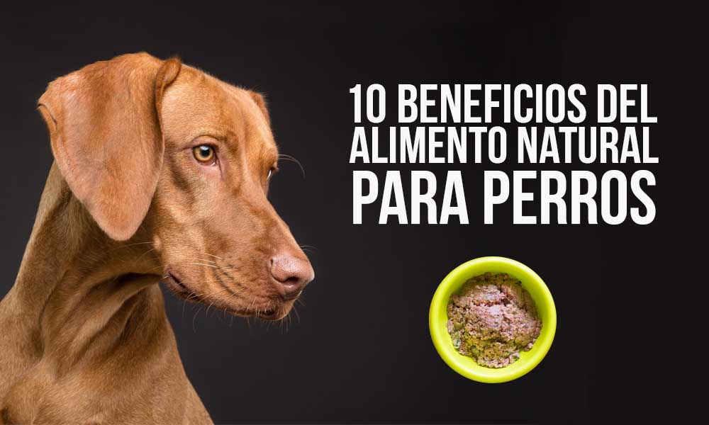 Alimento Natural para Perros